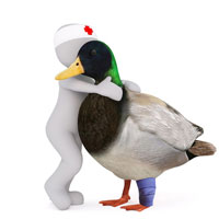 small-duck-image